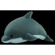 Dolphin Buddy